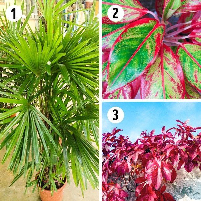 Les 15plantes les mieux adaptées àchaque pièce detamaison