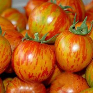 www.bjgseed.com  tomato seeds