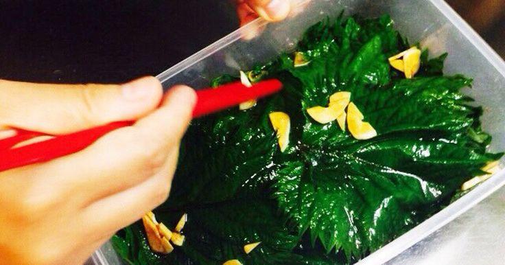 巷で流行っている食べられる合法ハーブ『SHISO』!  白飯や素麺、トマトスライスや山芋短冊、豚しゃぶや唐揚げにも!