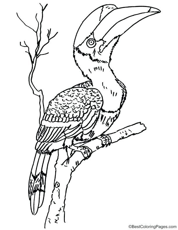 Amazing Great Blue Heron Coloring Page Image Rhinoceros Download