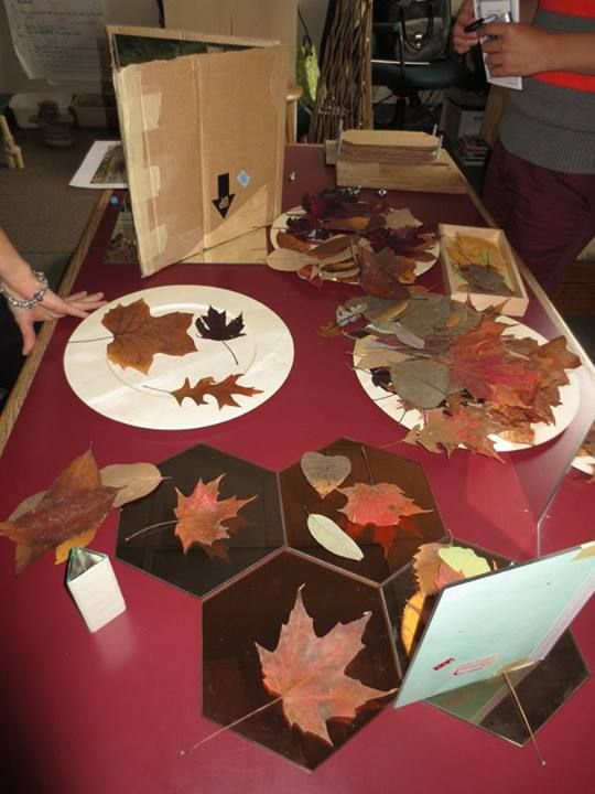 """Exploring autumn leaves at Richland Academy ("""",)"""