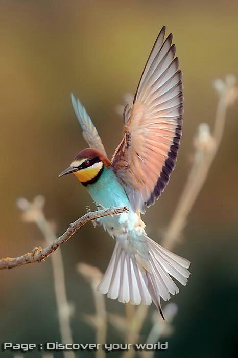a unique-lookng hummingbird