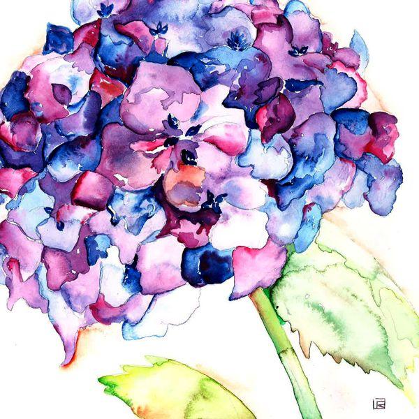 hydrangea watercolor - Google Search