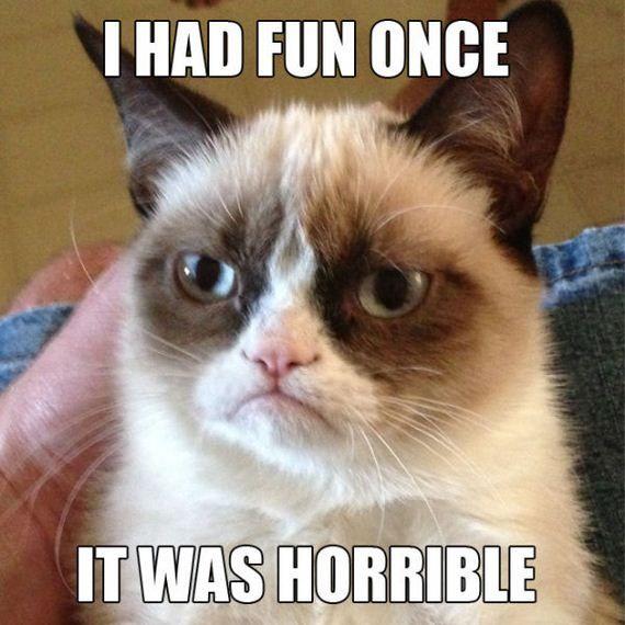 Grumpy Cat, le chat grincheux                                                                                                                                                     Plus