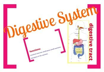 Use this TpT product to teach the Digestive System: Digestive Tract, Mechanical and Chemical digestion, Enzymes, Peristalsis, Villi, Microvilli. This leaves ppt presentations miles away! The teacher decides what can be explored and how exhaustive the explanations can be. NGSS: LS1.A; MS-LS1-3; HS-LS1-2. Extract the files and run a file called Prezi.exe!