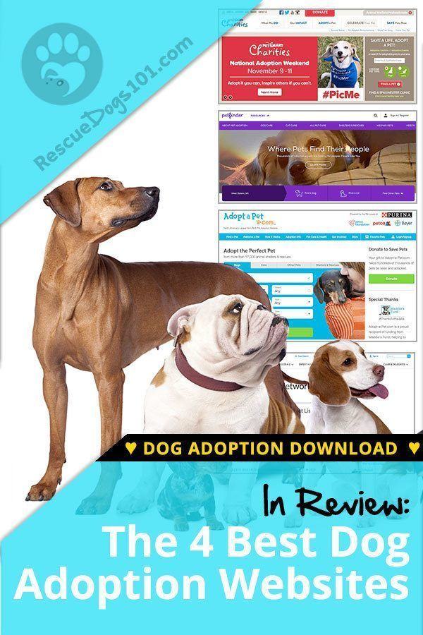 The 4 Best Adoption Websites For Dogs Dog Adoption Adoption Websites Dogs