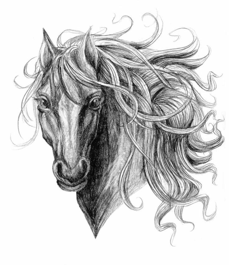 the 33 best feminine horse tattoo designs images on pinterest horse tattoos cool tattoos and. Black Bedroom Furniture Sets. Home Design Ideas