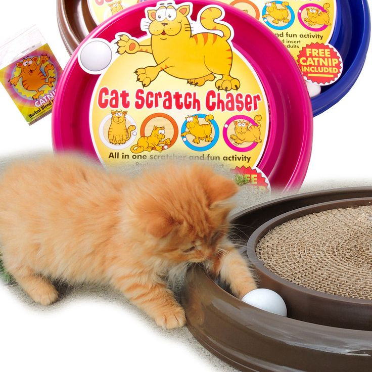 Cat Scratch Chaser-Cats-Cat Toy-Cat Scratcher-Cat Chaser-Kittens-Ball-Fun