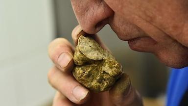 Italské lanýže aspirují na seznam dědictví UNESCO