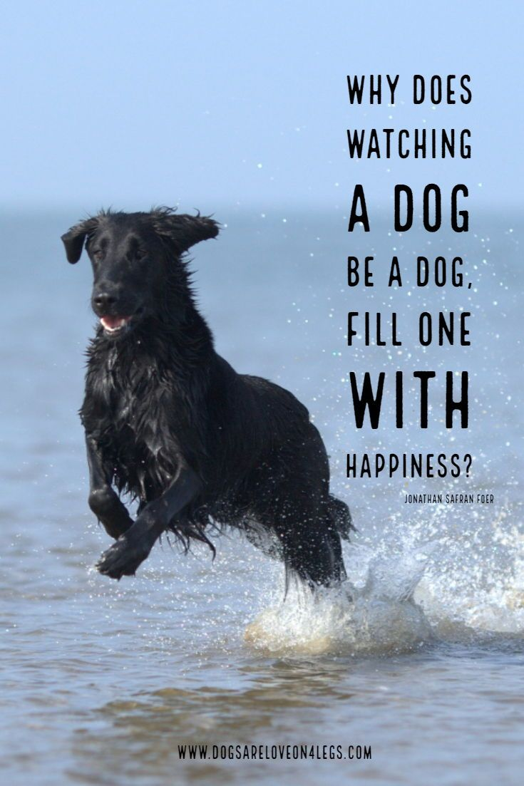 Dog Quote Why Does Watching A Dog Dog Dog Quotes