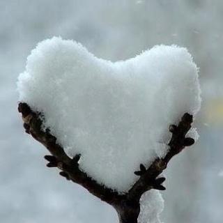 Hideg szív