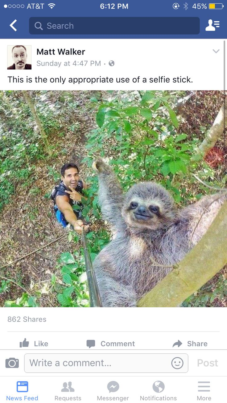 LOL....the sloth is like, ' Yaaasssss, make sure you get my good side!'