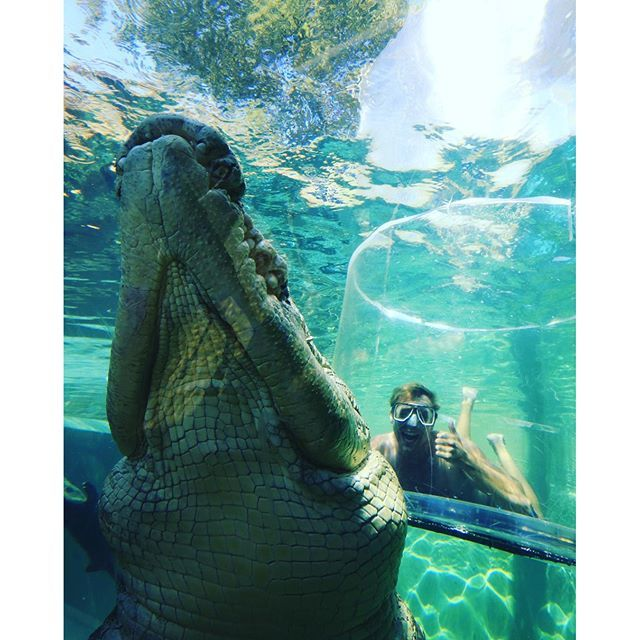 What does @linc_lewis do when he visits Darwin? Of course he comes and sees his mate Axel the 1 tonne, 5.1m crocodile. Thanks for dropping in Lincoln, hope you have had a great week in #Darwin #ntaustralia