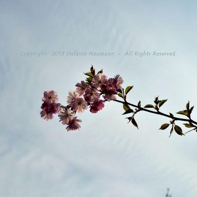 #OSTERIMPRESSIONEN  --  über den blühenden Frühling.  --  von Steffi am 2014-04-16 auf #KokopelliBeeFree Media, #KBFPhotography