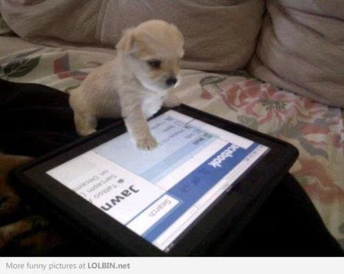 <3: Cute Puppies, Dogs, Community Management, Little Puppies, Pet, Social Media, Funny Animal, Malt Puppies, Weights Loss