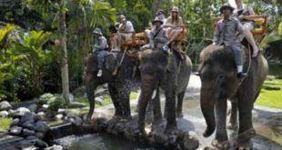 Bali Zoo Long Trek Elephant Ride Expedition