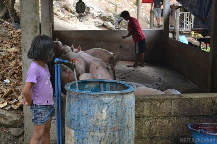 【Rico's Lechon】フィリピン名物。豚の丸焼き(レチョン)の工場を取材してきました! | フィリピン留学 セブイチ ~セブ島留学調査隊~