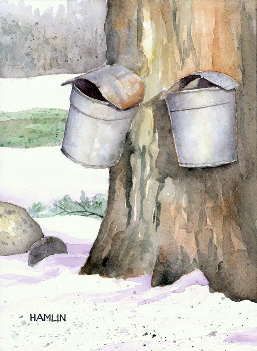 There are still a few people who collect sap the old-fashioned way, hanging buckets on taps they drive into maple trees rather than using hoses and a