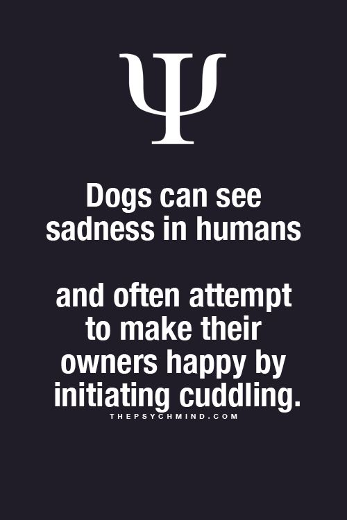 Dogs can see sadness in humans and often attempt to make their owners happy by initiating cuddling