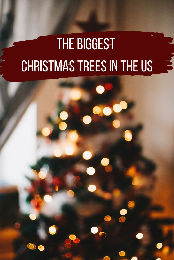 15 Biggest Christmas Trees In The Us Big Christmas Tree Christmas Travel Destinations Christmas Tree
