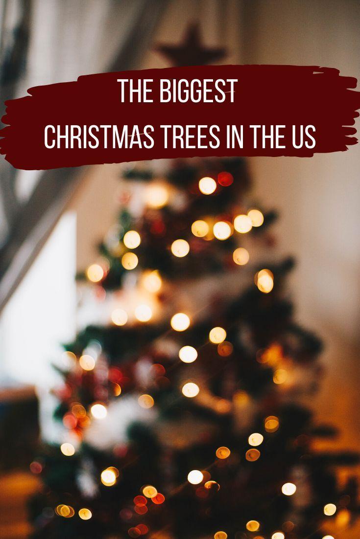 15 Biggest Christmas Trees In The Us Big Christmas Tree Christmas Tree Adventure Travel Wanderlust