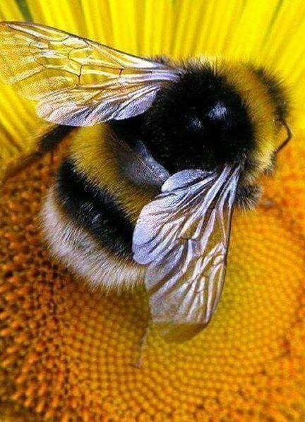 Petite abeille . Il ne faut pas les tuer sans les abeilles guêpes où autres insectes il n'y aura plus de pollinisation! Protégeons les aussi ses petites bêtes!