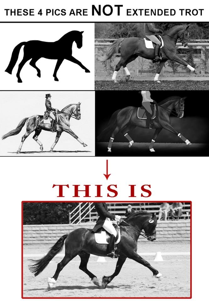 It's TIME... to TRAIN... your EYE... as to what is correct, and what is not.  Tension is defined as muscular resistance or contraction that is counter-productive to efficient movement, propulsion and balance. So we want the whole horse relaxed, without tension but fit. Relaxed but not slack, toned but not tense.