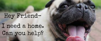 Pug Rescue of San Diego