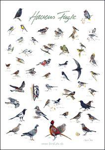 Plakater med fugle
