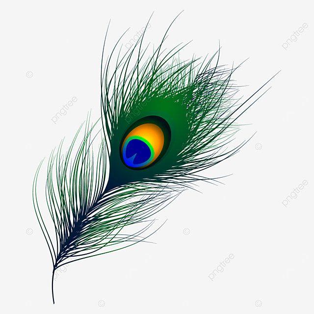 म र प ख व क टर प ख म र प ख सज वट प ख म फ त ड उनल ड क ल ए Png और व क टर In 2021 Feather Background Feather Vector Watercolor Feather