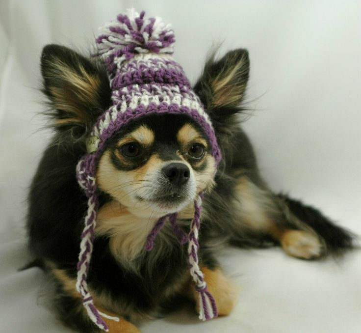 Dog+hat+crocheted+Purple+and+white+wool+Small+or+by+ShaggyChic,+$15.00