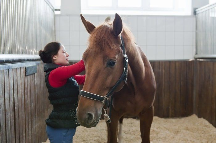 25 Basic Horse Care Points To Know As A Horse Owner In 2020 Horse Care Equine Care Horses