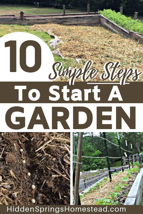 Vegetable Garden, Tips For Starting A Garden