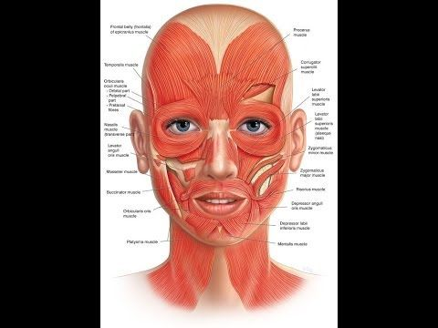 Best Face And Jowls Workout Solutions: Fix Saggy Skin With Face Toning Treatments And Rubbing - YouTube