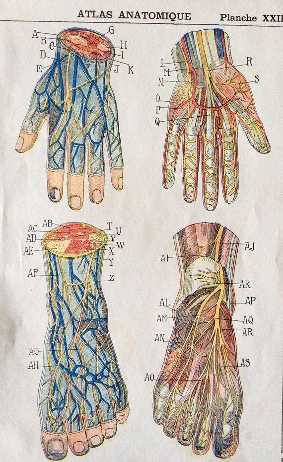 7ae90ba25406e717b1de0e631c52ca61 antique french anatomy bookplate print 1910 hand foot dissection