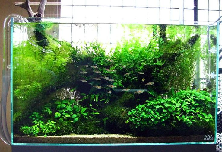 Let us think out of the box a little bit. Or maybe put our thoughts into a box. A glass box. An Aquarium. If you ever wanted to have a garden but didnt have the space for it, how bout your own minature underwater garden? #Urban www.asiahomegarden.com