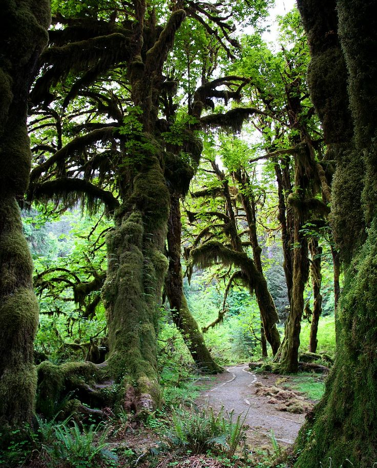 Hoh Rainforest, Olympic National Park, Washington