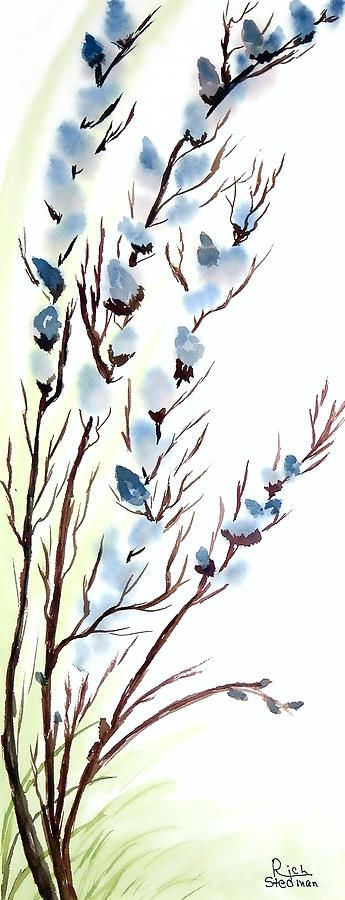 pussywillows   Pussy Willows In Spring Painting - Pussy Willows In Spring Fine Art ...