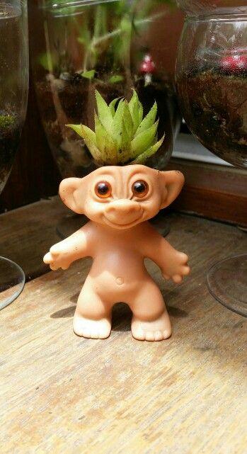 Succulent troll doll. Layla named him Mr Pineapple Head