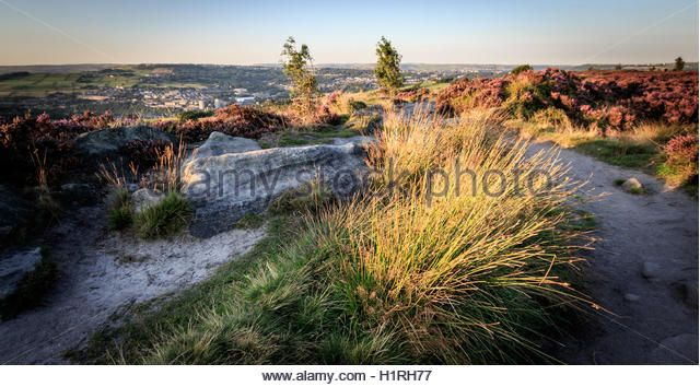 Norland, Halifax, West Yorkshire, UK 10th September, 2015. UK Weather Heather in flower on a beautiful day with white clouds and - Stock Image