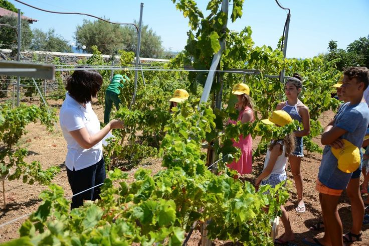 Authentic Experiences at Creta Maris: Care of the Vineyard and Wine Tasting.
