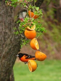Besides bringing a magical beauty to any garden, butterflies help promote growth by pollinating flowers. You can attract more butterflies to your yard with these butterfly feeders, that also serve as attractive garden ornaments. Mother Nature would definitely approve. Get Free Email Updates!Signup now and receive an email once we publish new content. I will …