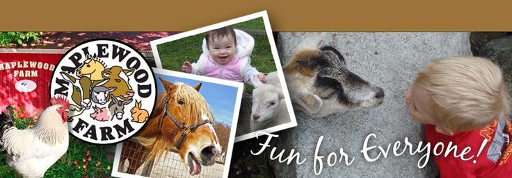 Fun farm activities, animal experiences family and kids - Maplewood Farm, North Vancouver