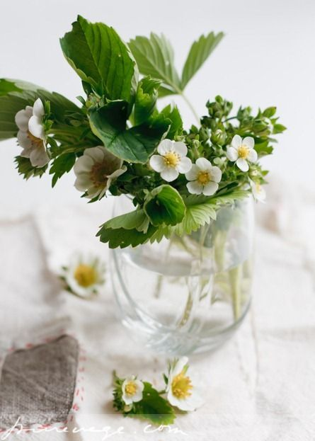 Strawberry blossoms: Beautiful Flower, White Flower, Flower Green, Flower Centerpieces, Flower Arrangements, Strawberries Blossoms, Strawberries Flower, Floral, Alpin Strawberries