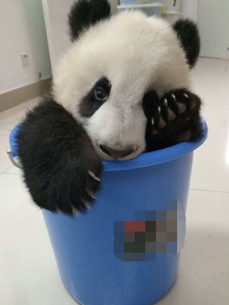 Oh no, I got the 'bucket challenge' wrong...