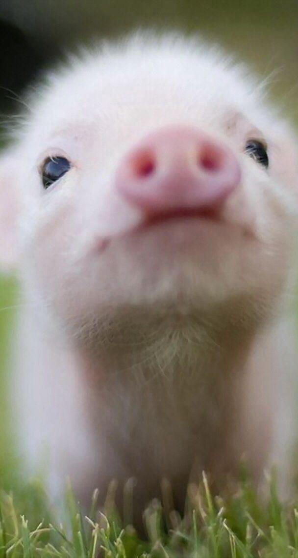 Little piglet!!:)