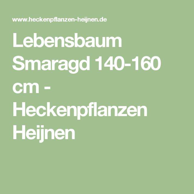Lebensbaum Smaragd 140-160 cm - Heckenpflanzen Heijnen