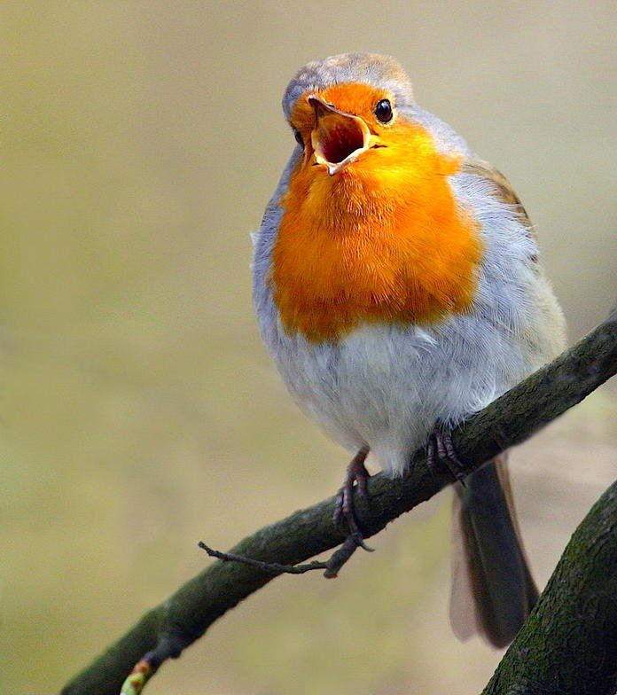 So Locken Sie Vogel In Ihren Garten Vogel Im Garten Vogelbad Garten Garten