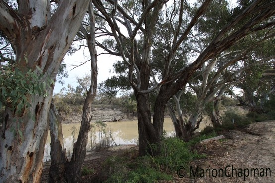 Menindee Lakes, outback NSW (photography by Marion Chapman)