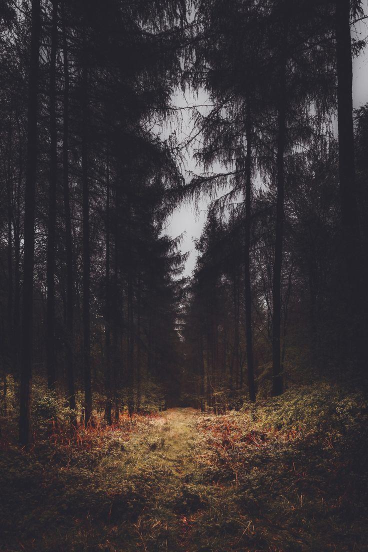 'Dark Forest' - By Freddie Ardley Photography Facebook Twitter
